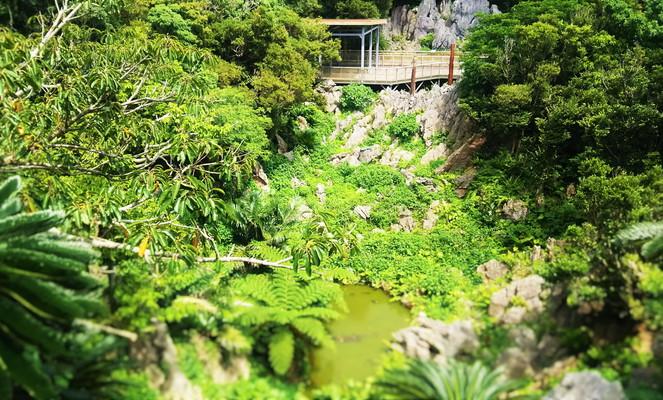 大石林山 沖縄の自然 Nature of Okinawa