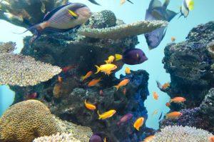 海中の熱帯魚 Underwater tropical fish